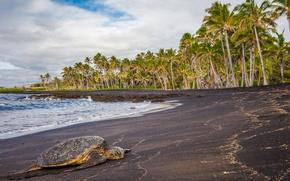 Картинка море, тропики, пальмы, черепаха, Гавайи, лежит, США, на берегу