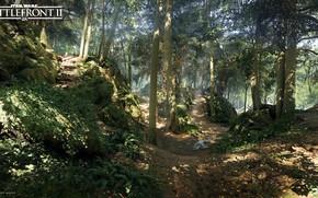 Картинка лес, природа, тропа, Star Wars Battlefront 2, Mazs Castle Forest