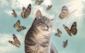 Картинка кот, бабочки, блаженство