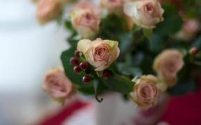 Картинка розы, букет, бутоны, боке