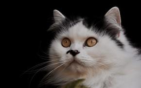 Картинка кошка, кот, фон, портрет, мордочка, взгяд