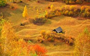Картинка осень, трава, солнце, деревья, поляна, желтые, домик, кусты, вид сверху