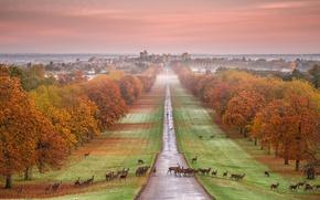 Обои Виндзорский замок, осень, олень, живонтые, панорама, Англия, туман, парк