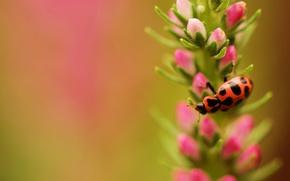 Картинка цветок, природа, растение, насекомое
