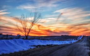 Картинка дорога, закат, природа, дерево