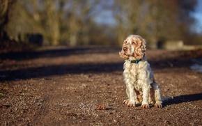 Картинка дорога, взгляд, собака