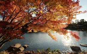 Картинка Природа, Дерево, Осень, Озеро, Япония, Japan, Nature, Fall, Tree, Autumn, Colors, Lake