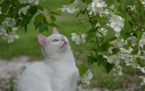 Картинка кошка, природа, белая