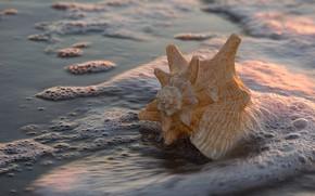 Обои песок, пена, вода, макро, свет, берег, ракушка