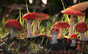 Картинка грибы, Art, Рендеринг, mushrooms, dan woje
