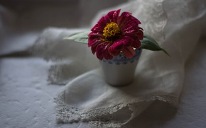 Картинка Цветок, Розовый, Цинния