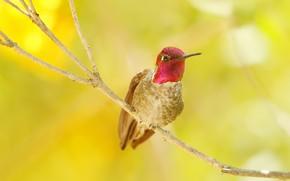 Картинка природа, птица, цвет