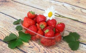 Обои Клубника, спелая, ягоды