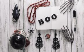 Картинка праздник, надпись, паук, скелет, хэллоуин, мыш