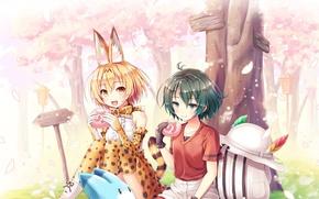 Картинка girl, anime, sakura, japanese, bishojo, Kemono Fiends