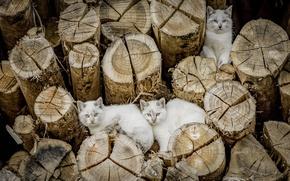 Обои кошки, коты, брёвна