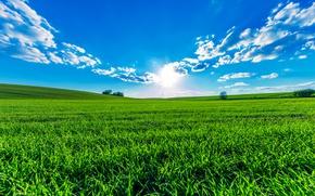 Картинка зелень, поле, лето, небо, трава, солнце, облака, деревья