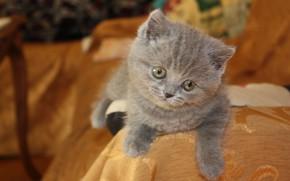 Картинка Кошка, Котёнок, Cat