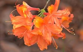 Картинка Flowers, Ветвь, Оранжевые цветы, Orange flowers