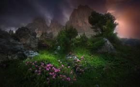 Картинка облака, деревья, цветы, горы, тучи, природа