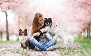 Картинка собаки, девушка, настроения, друзья