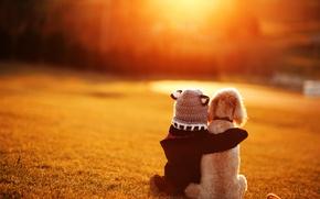 Обои друзья, дружба, боке, ребёнок, собака, девочка