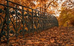 Обои листья, осень, забор, улица