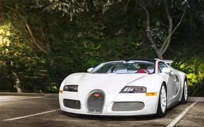 Обои Vitesse, Veyron, White, Bugatti, Wheels