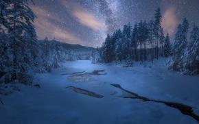 Обои звезды, деревья, природа, ночь, снег, зима