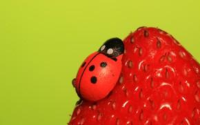 Картинка божья коровка, клубника, ягода, насекомое