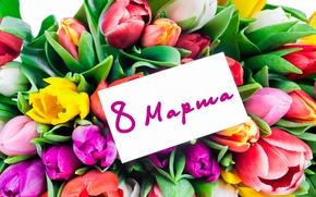 Обои fresh, colorful, love, romantic, тюльпаны, 8 марта, tulips, букет, flowers