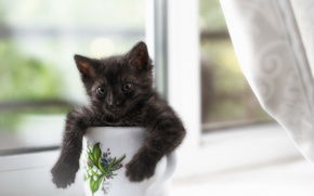 Картинка кошка, дом, окно, кружка