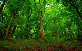 Картинка Деревья, Лес, Лето, Summer, Forest, Trees