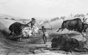 Обои лошади, Индейцы, охота, буйволы, дикий запад