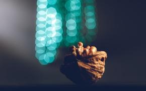 Картинка макро, блики, боке, грецкий орех