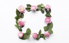 Картинка цветы, розовые, pink, flowers, пионы, peonies, frame, floral