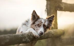 Обои собака, забор, друг