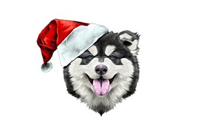 Обои dog, новый год, new year, шапка, счастье, 2018, santa claus, happy, праздник, шляпа, собака
