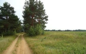 Картинка дорога, поле, лето, небо, деревья, сосны