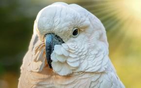 Картинка птица, перья, попугай