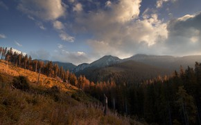 Картинка лес, горы, Digital Art, Под облаками, Michal Karcz