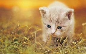 Картинка трава, малыш, котёнок, боке