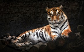 Обои тигр, хищник, лежит
