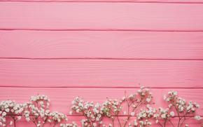 Картинка цветы, доски, белые, декор