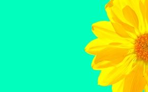 Картинка цветок, фон, обои, лепестки