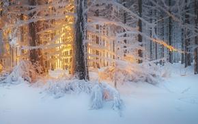 Картинка зима, лес, свет, снег, деревья, природа