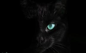 Картинка кот, черный, бирюзовые глаза