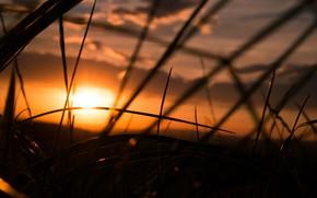 Картинка Sky, Grass, Sunset, Summer, Moody, Dusk, Melancholy