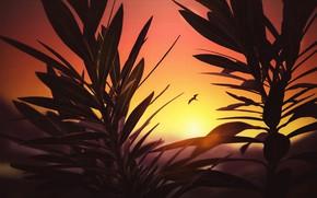 Картинка закат, птица, растения, силуэт, зарево