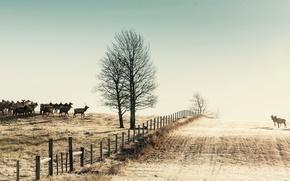 Картинка зима, поле, природа, забор, олени